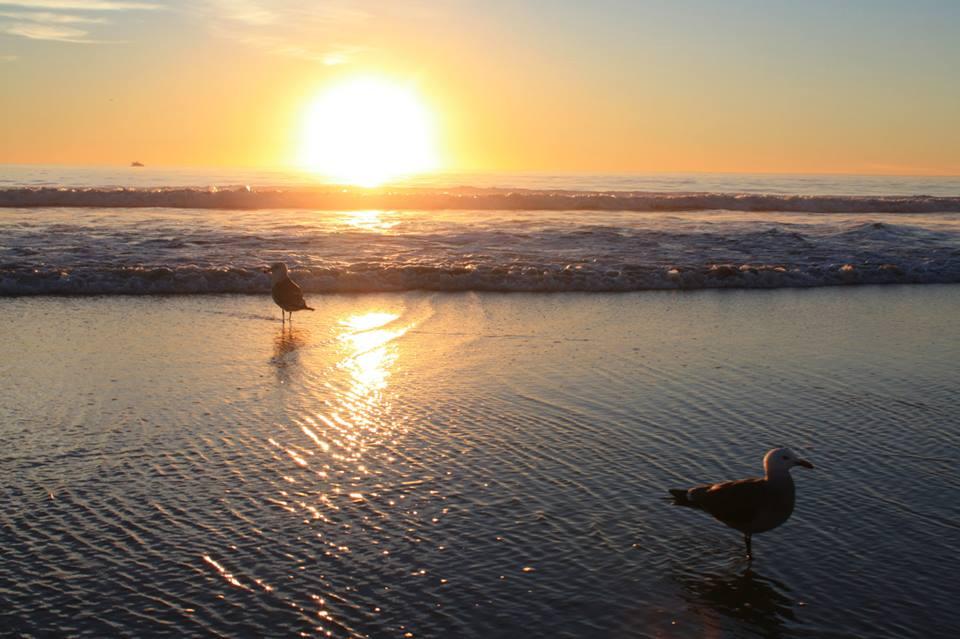 Seaguls at Sunset