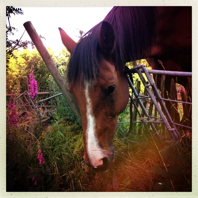 Horse with Foxgloves