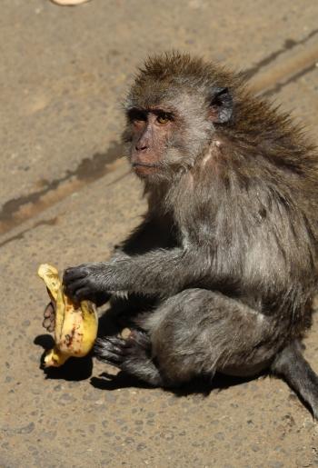 wet-monkey